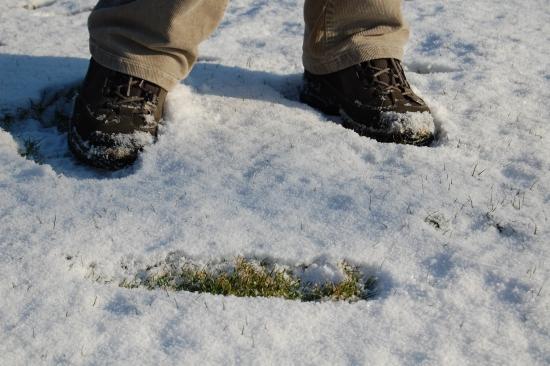 Chip im Schnee